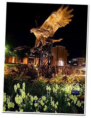 hawk statue at night