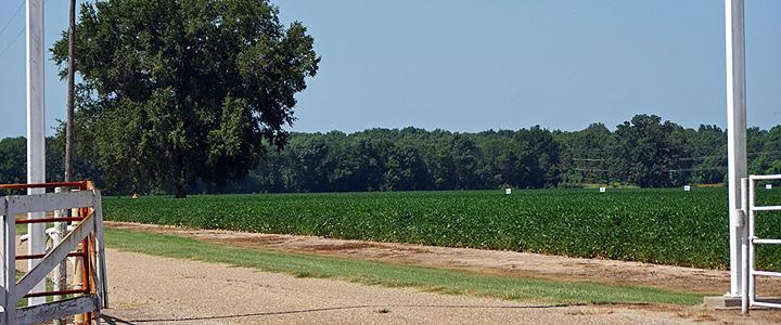 Road to the Ella and Morris Johnson Farm
