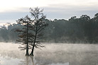 bayou with fog
